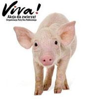 Fundacja Viva! Akcja Dla Zwierząt
